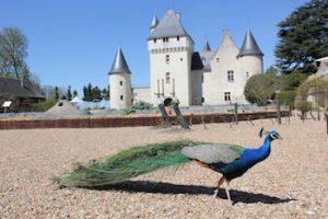 Chateau du Rivau and peacock www.loirevalleystay.com